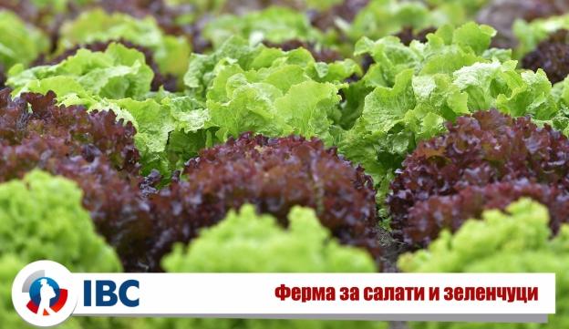 Salad_Picking_Pro-Force.jpg